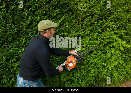 A man trimming a thick green hedge with a motorized hedge trimmer. - Stock Photo