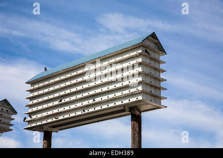 Large unusual purple martin house wooden birdhouse colony, blue sky in Pennsylvania, USA, bird nest, Pa images - Stock Photo