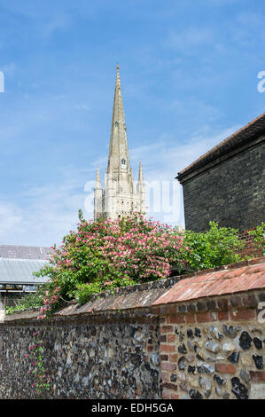 Spire of Norwich Cathedral with Wall and Honeysuckle in Foreground - Stock Photo