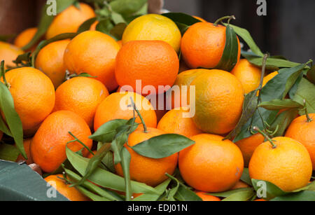 Tangerines (Citrus reticulata) with leaves, Germany - Stock Photo