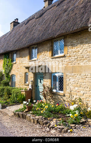 Charming pretty thatched cottage, thatching, leaded light windows, spring flowers in front garden at Taynton, The - Stock Photo