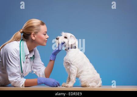 Cute little dog visits vet - Stock Photo