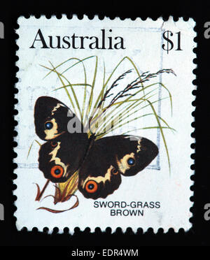 Used and postmarked Australia / Austrailian Stamp $1 Sword-Grass Brown Butterfly - Stock Photo
