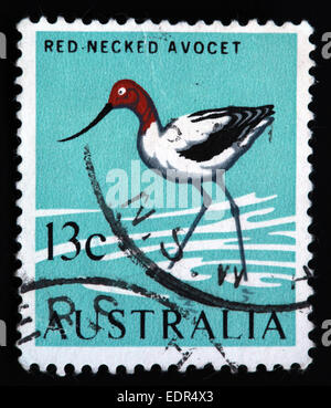 Used and postmarked Australia / Austrailian Stamp Red Necked Avocet 13c - Stock Photo