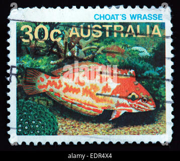 Used and postmarked Australia / Austrailian Stamp Choat's Wrasse - Stock Photo