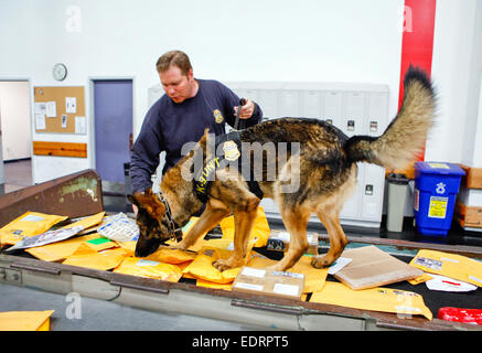 US Customs and Border Protection Officers K-9 Unit inspects newly arrived post at sorting depot in Florida. See - Stock Photo
