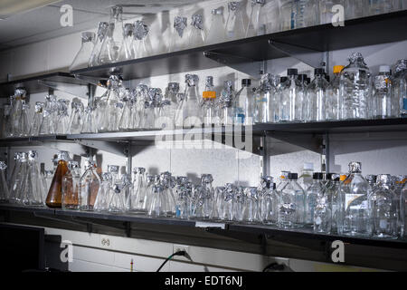 Empty Flasks & Beakers On Shelf In Chemistry Laboratory - Stock Photo