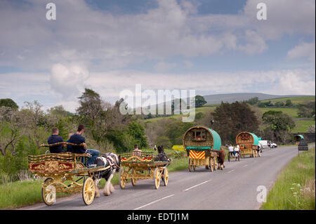 Horse drawn caravans heading towards the horse fair at Appleby in Westmorland along the A683 between Sedbergh and - Stock Photo