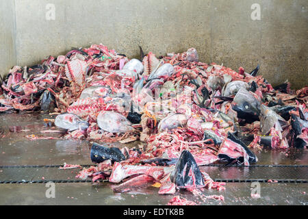 Fish garbage in the large Kitchen Waste rubbish, for recycling - Stock Photo