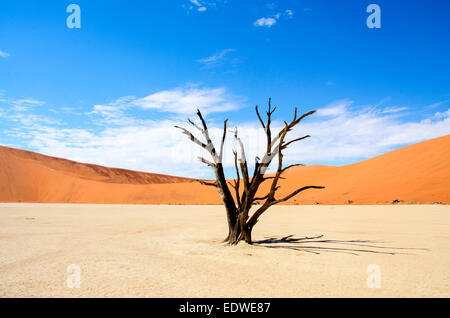 Deadvlei is a white clay pan located near the more famous salt pan of Sossusvlei, inside the Namib-Naukluft Park in Namibia. Als