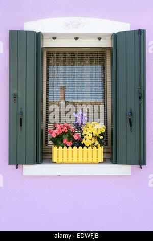 Colour contrasts in this typical Burano window and window box - Burano is a colourful  Italian island village / - Stock Photo
