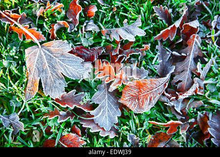 Fall, autumn, foliage on grass, frost,