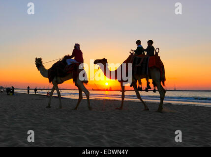 Camel ride on the beach at sunset in Dubai - Stock Photo