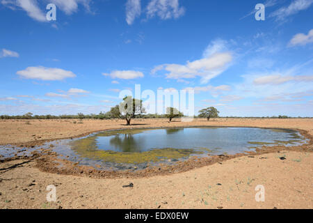 Slimy Watering Hole for Cattle along the Oodnadatta Track, South Australia, SA, Australia - Stock Photo