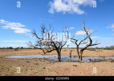 Slimy Watering Hole for Cattle along the Oodnadatta Track, South Australia - Stock Photo