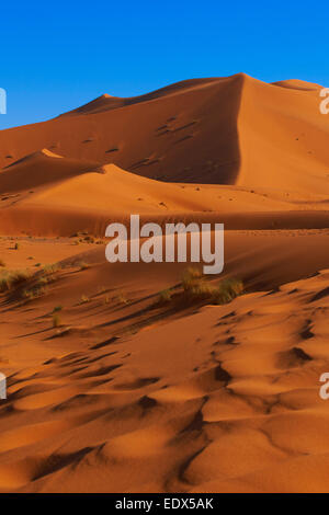 The Great Merzouga Dune, Erg Chebbi, Merzouga sand dunes, Sahara Desert, Morocco, Maghreb, North Africa - Stock Photo