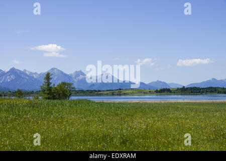 Blick auf den Bannwaldsee im Ostallgäu, Königswinkel, Tannheimer Alpen, Overlooking the Bannwaldsee in Ostallgaeu, - Stock Photo
