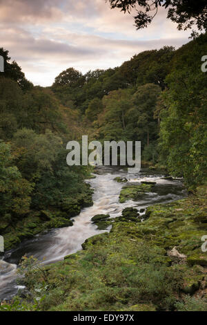 High view of the River Wharfe flowing through a narrow, steep-sided valley bordered by Strid Wood - Bolton Abbey - Stock Photo