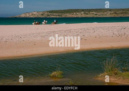 Bolonia beach and horses, Tarifa, Cadiz province, Region of Andalusia, Spain, Europe Stock Photo