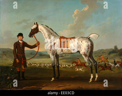 Scipio, a spotted hunter, the property of Colonel Roche Scipio, Colonel Roche's Spotted Hunter Scipio - Stock Photo