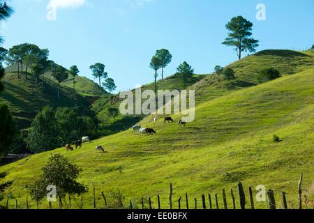 Dominikanische Republik, Cordillera Central, Landschaft südlich von Constanza an der Carretera al Salto de Aguas - Stock Photo