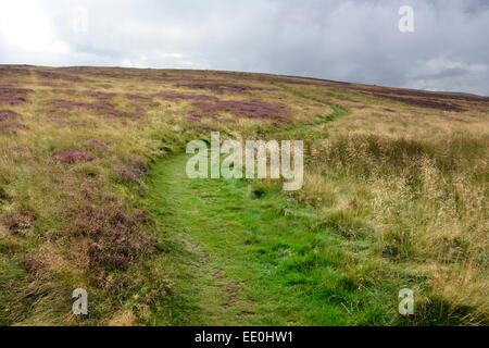Path leading up through the Pentland Hills in summer - Stock Photo