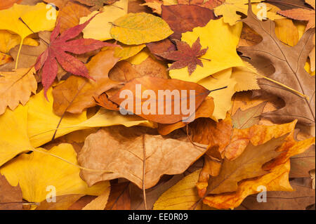 background of fallen autumn dried leaves - Stock Photo