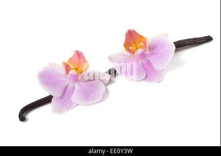 Beautiful blooming orchid and vanilla stick isolated on white - Stock Photo