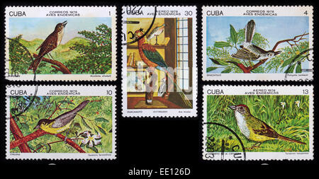 Cuba - circa 1978: A post stamp printed in the Cuba shows image of Birds, series Birds, circa 1978. - Stock Photo