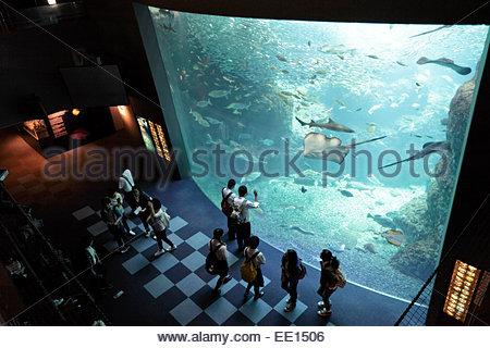 school group teenagers looking at various type of fish in large aquarium - Stock Photo