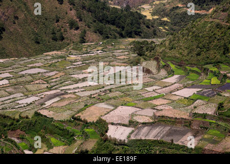 Rice terraces in Mountain Province, Philippines, in February. Rice fields are resting between new planting season - Stock Photo
