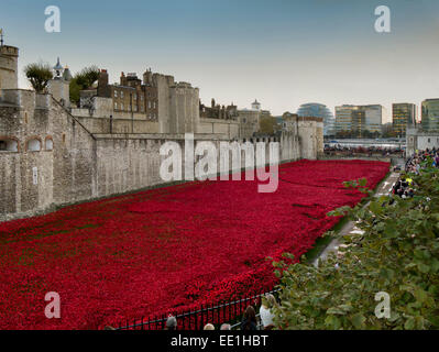 Ceramic poppies forming the installation Blood Swept Lands and Seas of Red, Tower of London, London, England, UK - Stock Photo