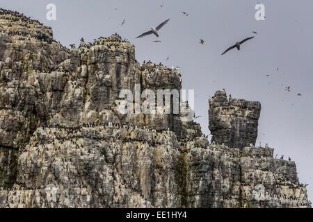 Steep cliffs filled with nesting birds on the south side of Bjornoya, Bear Island, Svalbard, Arctic, Norway, Scandinavia, - Stock Photo
