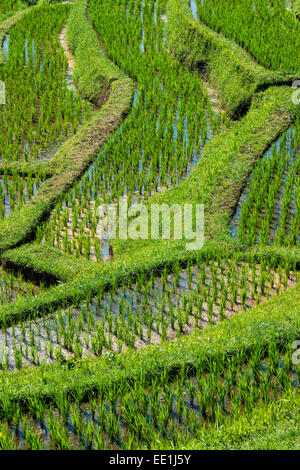 Rice terraces, Jatiluwih, UNESCO World Heritage Site, Bali, Indonesia, Southeast Asia, Asia - Stock Photo