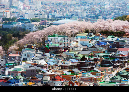 Spring cherry blossom festival, Jinhei, South Korea, Asia - Stock Photo
