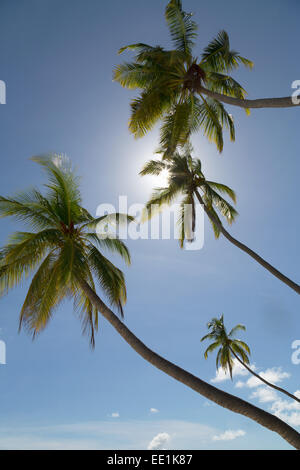 Tall palm trees silhouetted against the sun on an island in the Maldives, Indian Ocean, Asia - Stock Photo