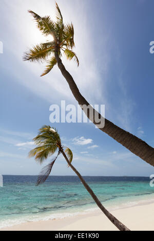 Two palm trees silhouetted against the sky on a deserted beach on an island in the Northern Huvadhu Atoll, Maldives - Stock Photo