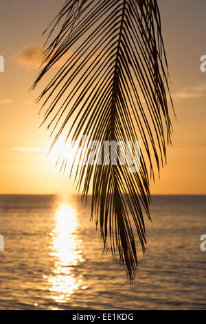 A tropical sunset through palm leaves on an island in the Maldives, Indian Ocean, Asia - Stock Photo