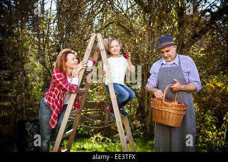 Multi-generation family picking apples, Munich, Bavaria, Germany - Stock Photo