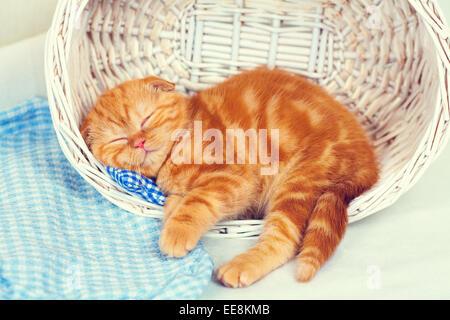 Cute red kitten sleeping in a basket - Stock Photo