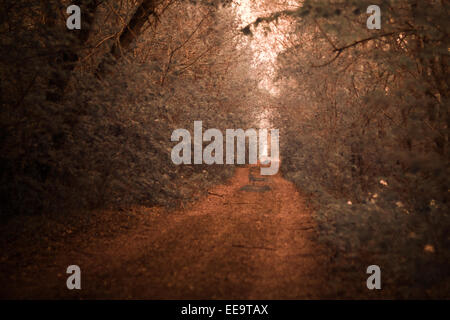 infrared photo of road lined with oak trees - Stock Photo