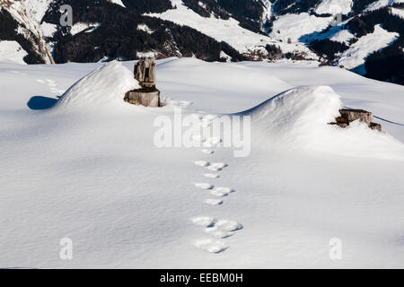 Tracks of a Mountain Hare (Lepus timidus) in snow in the Austrian Alps. Austria Europe. - Stock Photo