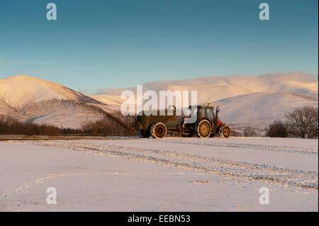 Farmer spreading slurry on snow covered field. Cumbria. - Stock Photo