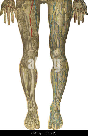 The human body with superimposed colored plates, by Julien Bougle, circa 1899. - Stock Photo