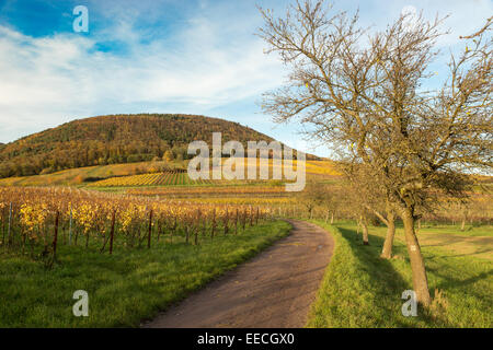 Vineyards in Pfalz at autumn time, Germany - Stock Photo