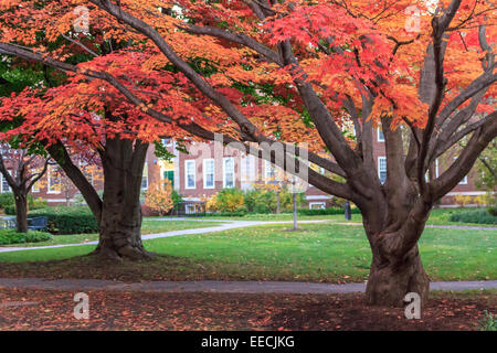 Colorful fall trees on the campus of Harvard Business School in Cambridge, MA, USA. - Stock Photo