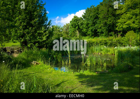 Garden wildlife pond in summer in country garden in Swinbrook, The Cotswolds, England, United Kingdom - Stock Photo