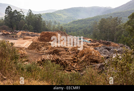SWAZILAND, AFRICA - Timber industry in Hhohho District. Piles of timber, sawdust and slash near mill. - Stock Photo