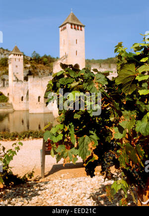 Cahors, Midi-Pyrenees, France. Pont Valentre - 14thC medieval fortified bridge with vines in foreground - Stock Photo