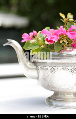 Busy Lizzy in the silver tea pot  close up - Stock Photo